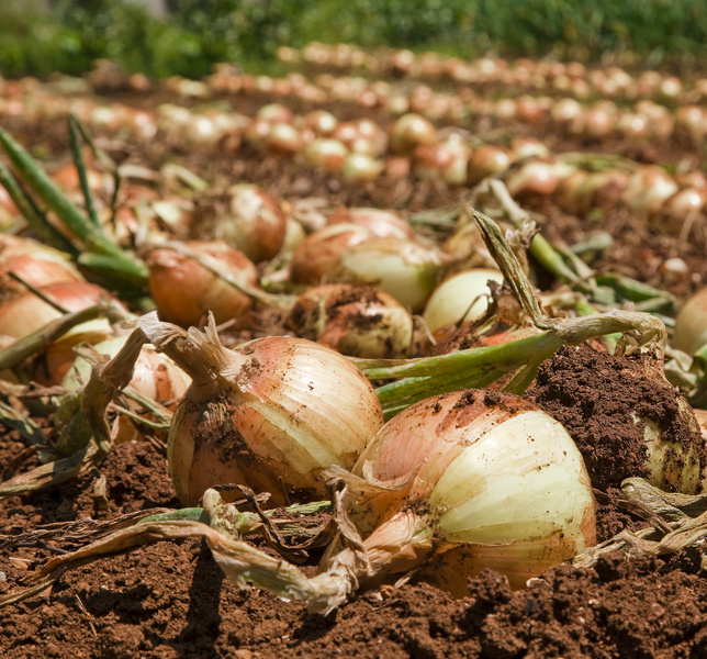 Business Ideas Small Business Ideas How To Start Onions